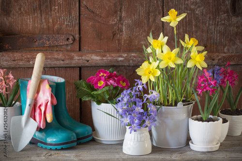 Gardening tools and spring flowers on wooden background - 254320824