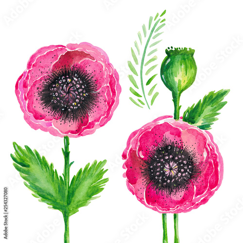Watercolor illustration of red flowering poppies stem green leaves Floral set on white background - 254327080