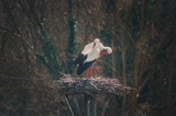 Couple of storks in the park of Salburua in vitoria, Alava, Basque Country, Spain