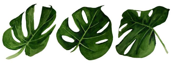 Watercolor tropical monstera leaf set © Anna