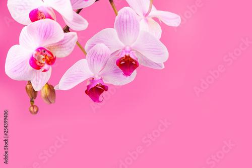 Beautiful pink orchid closeup. - 254399406