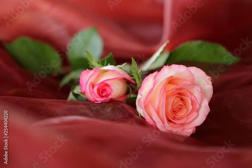 zwei Rosen auf rotem Untergrund