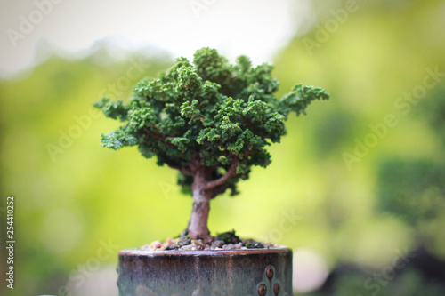 Sekka Hinoki Japanese bonsai in hand and nature blurred background © Nori Wasabi