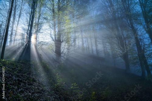 sunlight illuminating the forest.trabzon