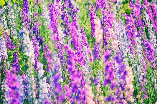 Flowers. - 254463248