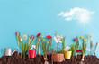 Sunny spring flower garden