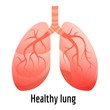 Healthy lung icon. Cartoon of healthy lung vector icon for web design isolated on white background