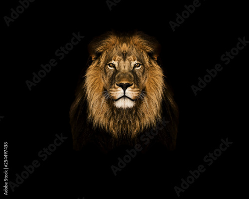 Lion head on black and white wallpaper - اسد