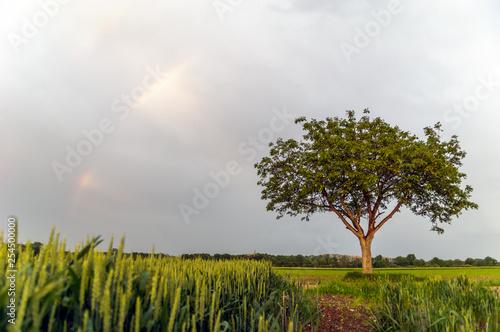 Arc en ciel © bios48