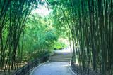 Fototapeta Bambus - The road to the bamboo grove © Ekaterina