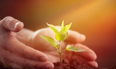Green Growing Plant and Human Hands
