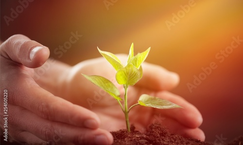 Green Growing Plant and Human Hands © BillionPhotos.com