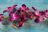 Purple orchids on a blue wooden background.