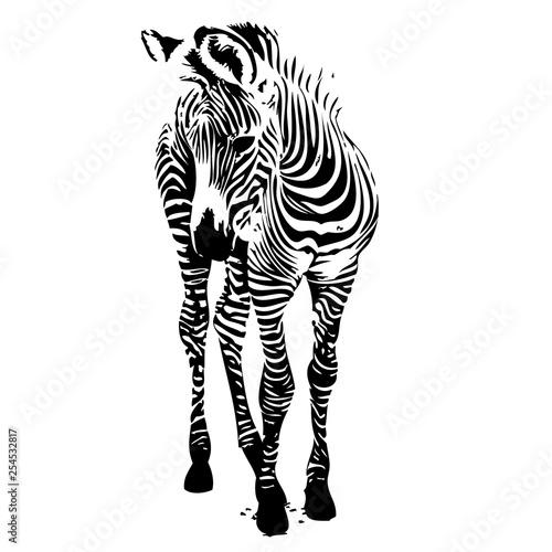 Zebra silhouette vector illustration - 254532817
