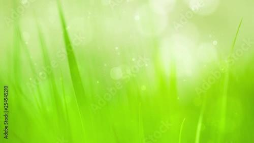 Magic morning spring season green grass bokeh background. Selective focus used.