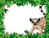 Lemur in nature frame