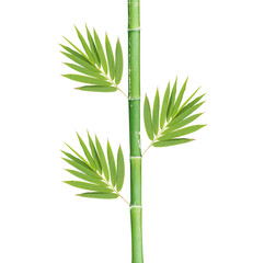 bamboo isolated on a white background © prapann