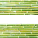 bamboo isolated on a white background