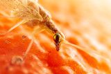 Portrait of a fly on an orange background