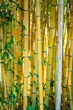 Bamboo forest. Natural background