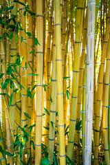 Bamboo forest. Natural background © EwaStudio