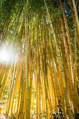 Bamboo sprouts forest © EwaStudio