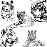 Tiger silhouette collection. Vector illustration