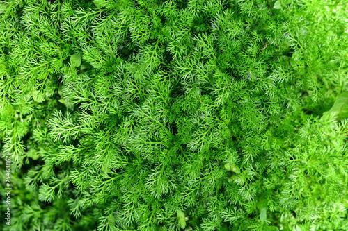 tasty fresh eco greens - 254638672