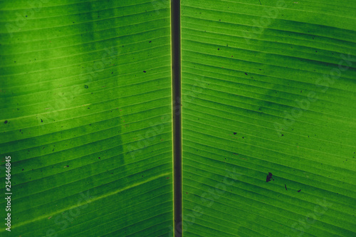 Leaves green Dark Leaf detail In the natural forest - 254646845