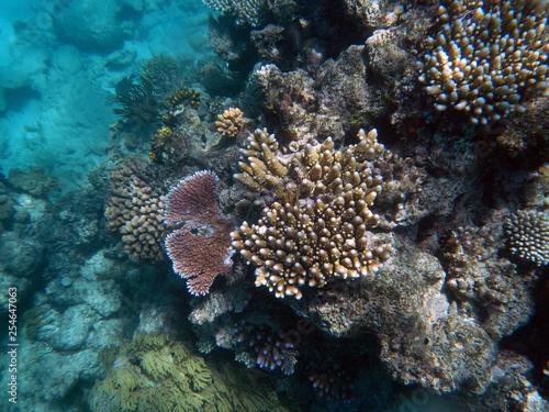 obraz PCV underwater, coral, Great, barrier, reef, Cairns, Australia