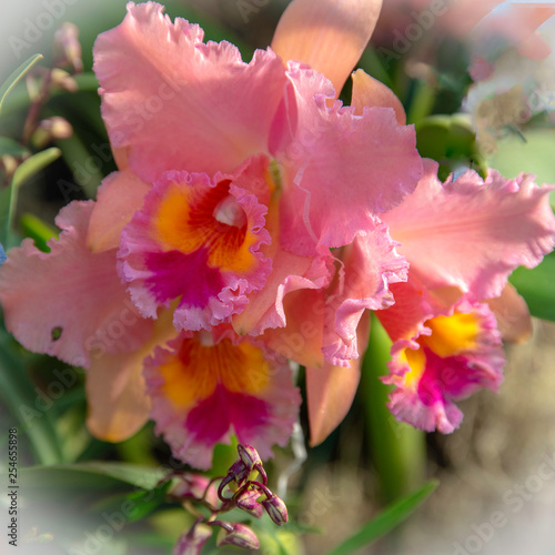 Pretty Pink Orchid - 254655898