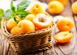 Leinwandbild Motiv fresh apricots