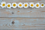 A line of daisy flowers on a wooden empty copy space background