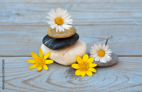 Three cairn natural Zen stones piled up on a old gray wooden background with field flowers flower and empty copy space