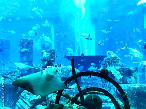 obraz lub plakat Many fish caught underwater.