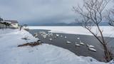 Swan Lake Fuji Mountain Scenery