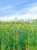 Mohnblumen und Kornblumen im Feld