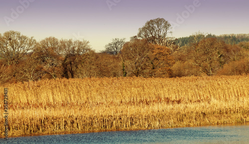 River, Reeds and Autumn colour. © Tony and Sally.
