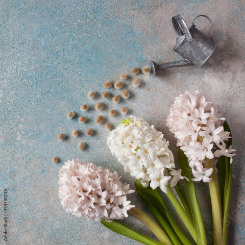 Spring card with flowers hyacinths and watering can