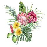 Watercolor bouquet with tropical flowers. Hand painted protea, plumeria and palm leaves isolated on white background. Nature botanical illustration for design, print. Realistic delicate plant. - 254735200