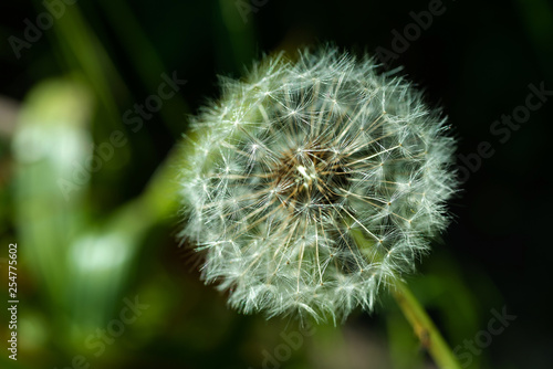 Flowers on natural background - 254775602