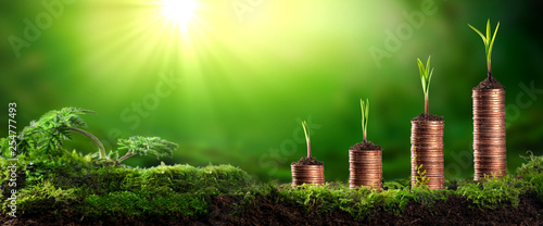 Young Plants Growing Out Of Stacks Of Coins In Lush Mossy Garden - Investing / Business Success Concept
