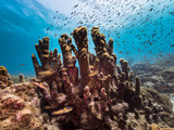 Seascape of coral reef in the Caribbean Sea around Curacao at dive site Mako's Mountain with various corals and sponges