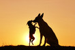Leinwandbild Motiv Two silhouette dogs on a background of a sunset, breed Malinois and Pinscher