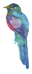 Watercolor bright hand-drawn bird on the white isolated background. Decorative clipart element. Spring and summer season bird. © Nastia