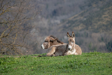 A hill with Donkeys sitting in the sun © scesareo