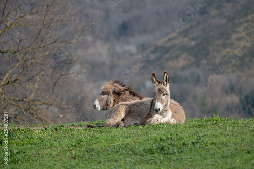 A hill with Donkeys sitting in the sun