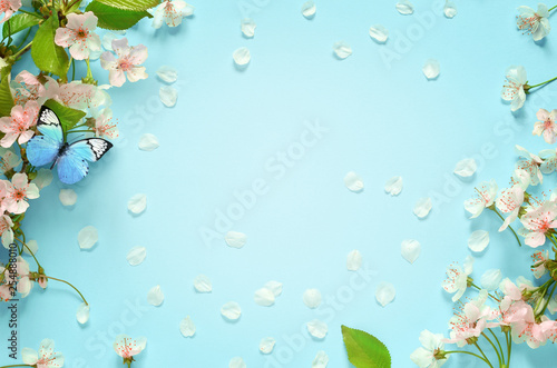 Leinwandbild Motiv Beautiful spring nature background with butterfly, lovely blossom, petal a on turquoise blue background , top view, frame. Springtime concept.