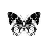Hand drawn butterfly - 254891443