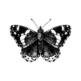 Hand drawn red admiral butterfly - 254891877